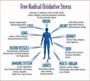 free_radical_oxidative_stress